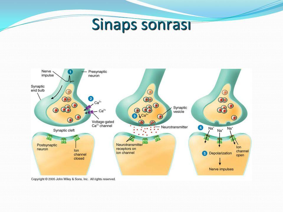 Dopamin Beyinde, dopamin reseptörlerini aktive ederek nörotransmitter olarak görev yapar Dopamin, ayrıca, hipotalamus da salgılanır ve kana karışarak nörohormon görevi yapar Parkinson hastalarında, beyindeki dopamin miktarını artırmak için, dopamin sentezinde öncü molekül görevi üstlenebilen L-Dopa molekülü kullanılır, zira L-DOPA kan-beyin bariyerini aşabililir.