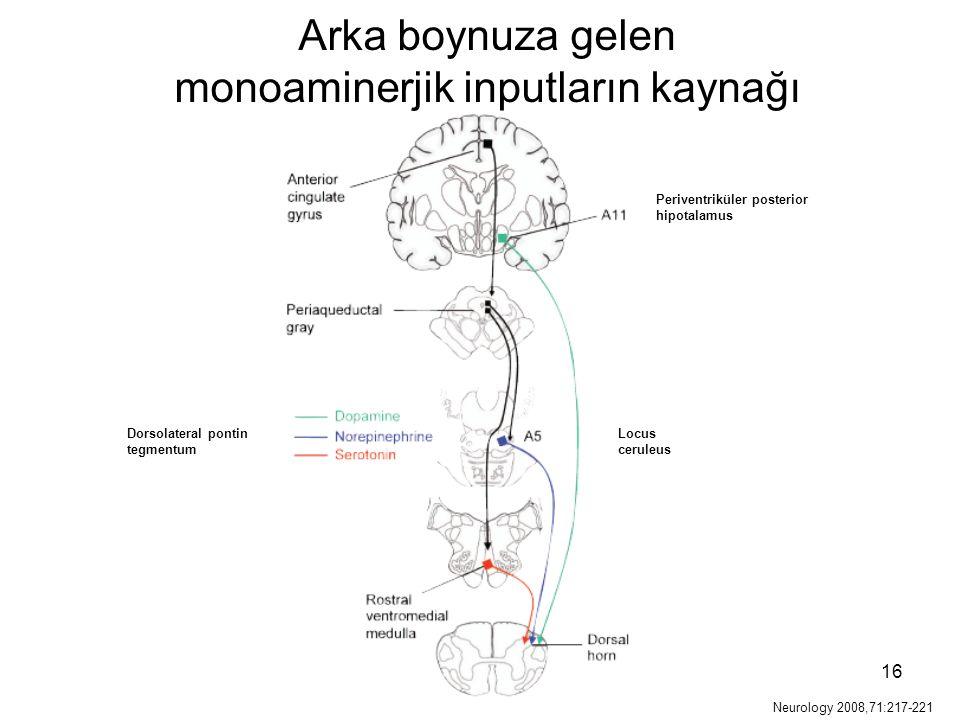 16 Periventriküler posterior hipotalamus Locus ceruleus Arka boynuza gelen monoaminerjik inputların kaynağı Dorsolateral pontin tegmentum Neurology 20