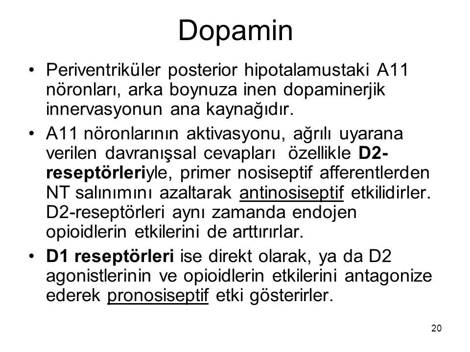 20 Dopamin Periventriküler posterior hipotalamustaki A11 nöronları, arka boynuza inen dopaminerjik innervasyonun ana kaynağıdır. A11 nöronlarının akti