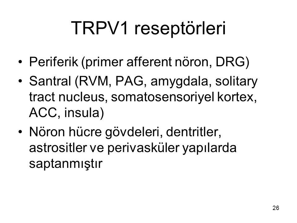 26 TRPV1 reseptörleri Periferik (primer afferent nöron, DRG) Santral (RVM, PAG, amygdala, solitary tract nucleus, somatosensoriyel kortex, ACC, insula