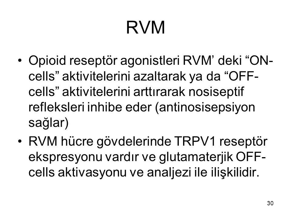 """30 RVM Opioid reseptör agonistleri RVM' deki """"ON- cells"""" aktivitelerini azaltarak ya da """"OFF- cells"""" aktivitelerini arttırarak nosiseptif refleksleri"""