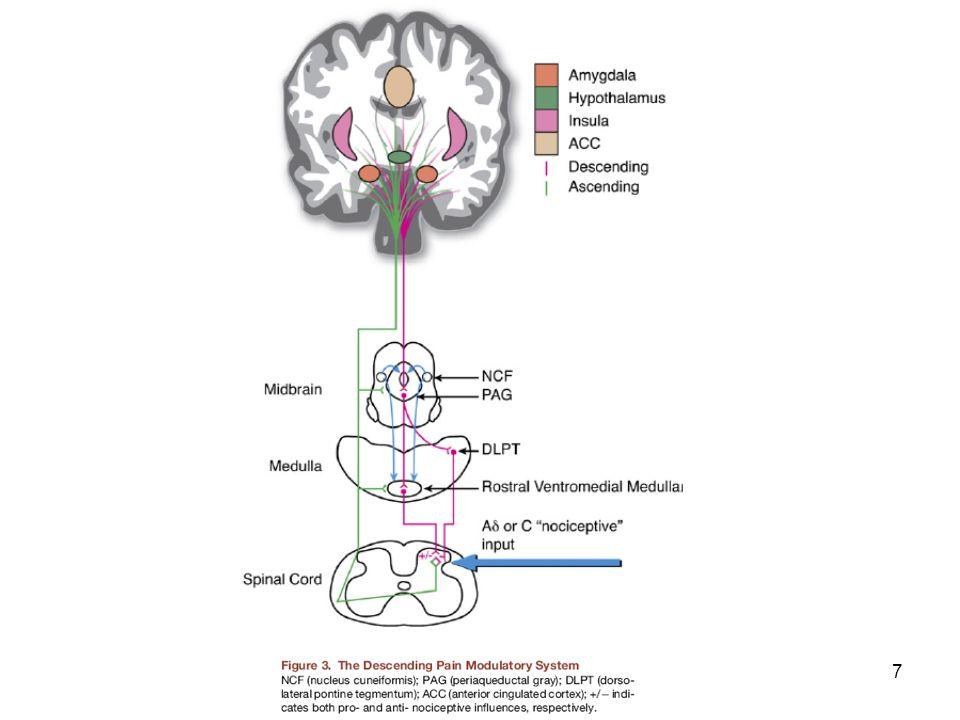 28 Kannobinoid reseptör tip 1 (CB1) ve TRPV1 Endokannobinoidler PAG' deki CB1- reseptörleri üzerinden ağrı fasilitasyonu, TRPV1 üzerinden ise ağrı inhibisyonu yaparlar.