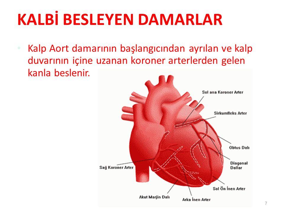 7 KALBİ BESLEYEN DAMARLAR Kalp Aort damarının başlangıcından ayrılan ve kalp duvarının içine uzanan koroner arterlerden gelen kanla beslenir.