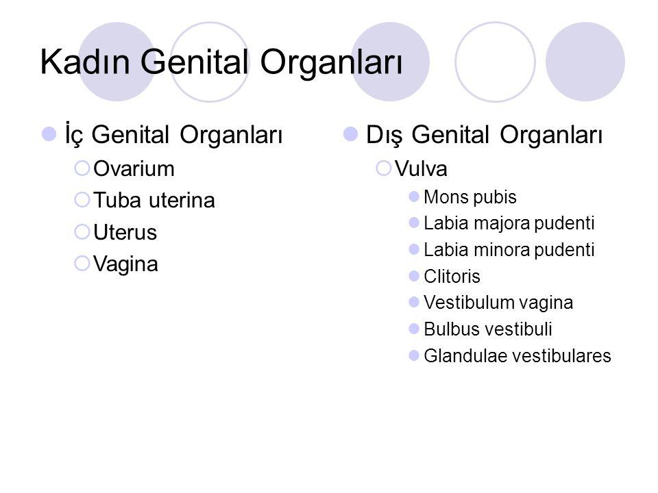 Kadın Genital Organları İç Genital Organları  Ovarium  Tuba uterina  Uterus  Vagina Dış Genital Organları  Vulva Mons pubis Labia majora pudenti