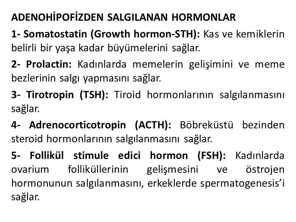 ADENOHİPOFİZDEN SALGILANAN HORMONLAR 1- Somatostatin (Growth hormon-STH): Kas ve kemiklerin belirli bir yaşa kadar büyümelerini sağlar. 2- Prolactin: