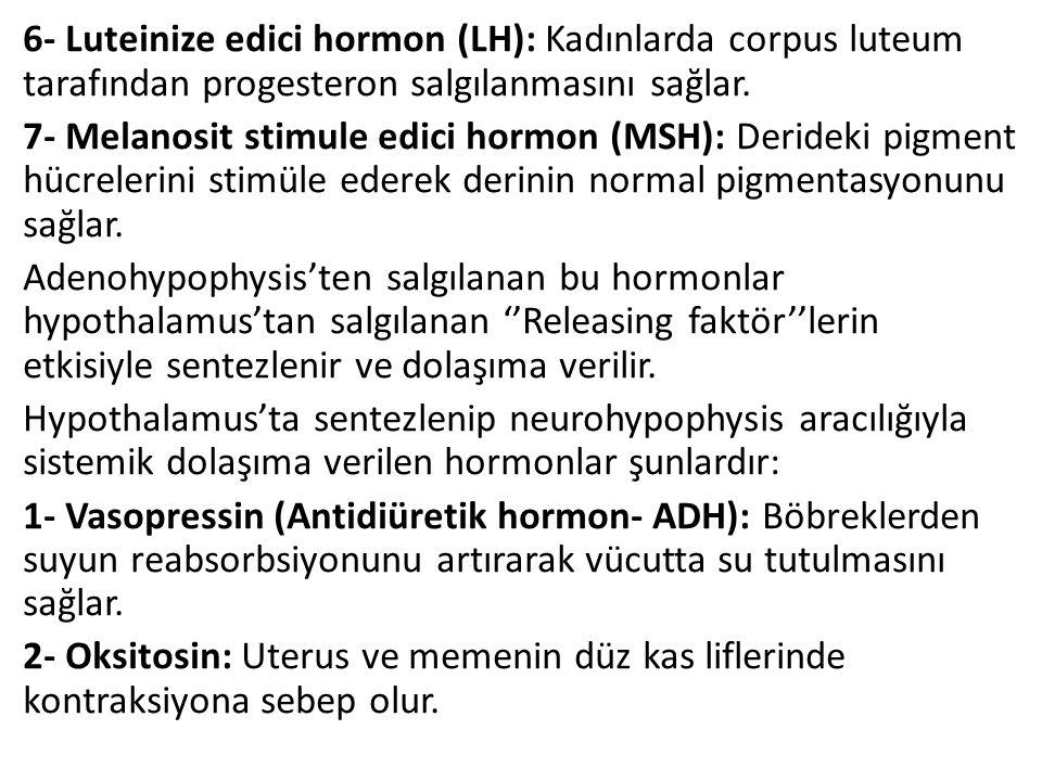 6- Luteinize edici hormon (LH): Kadınlarda corpus luteum tarafından progesteron salgılanmasını sağlar. 7- Melanosit stimule edici hormon (MSH): Deride