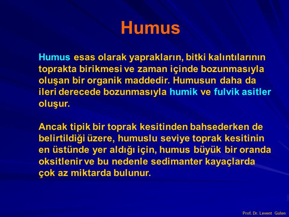 Prof. Dr. Levent Gülen Humus esas olarak yaprakların, bitki kalıntılarının toprakta birikmesi ve zaman içinde bozunmasıyla oluşan bir organik maddedir