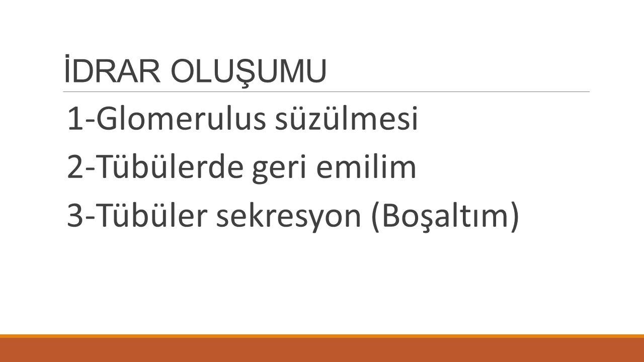 İDRAR OLUŞUMU 1-Glomerulus süzülmesi 2-Tübülerde geri emilim 3-Tübüler sekresyon (Boşaltım)