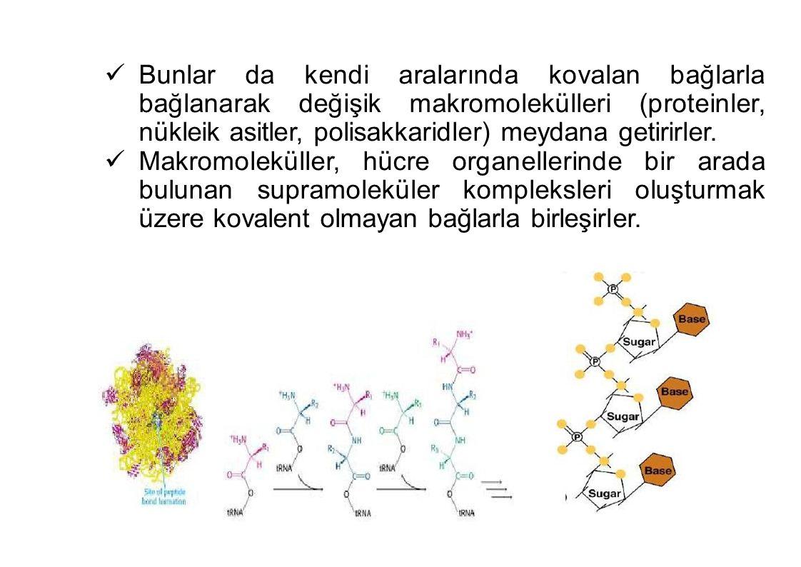 Bunlar da kendi aralarında kovalan bağlarla bağlanarak değişik makromolekülleri (proteinler, nükleik asitler, polisakkaridler) meydana getirirler. Mak
