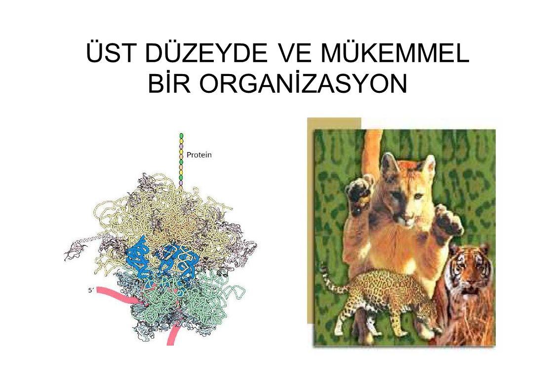 ÜST DÜZEYDE VE MÜKEMMEL BİR ORGANİZASYON