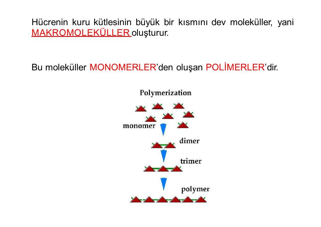 Hücreninkurukütlesininbüyükbirkısmınıdevmoleküller,yani M A K R O M O L E K Ü L L E R oluşturur. Bu moleküller MONOMERLER'den oluşan POLİMERLER'dir.