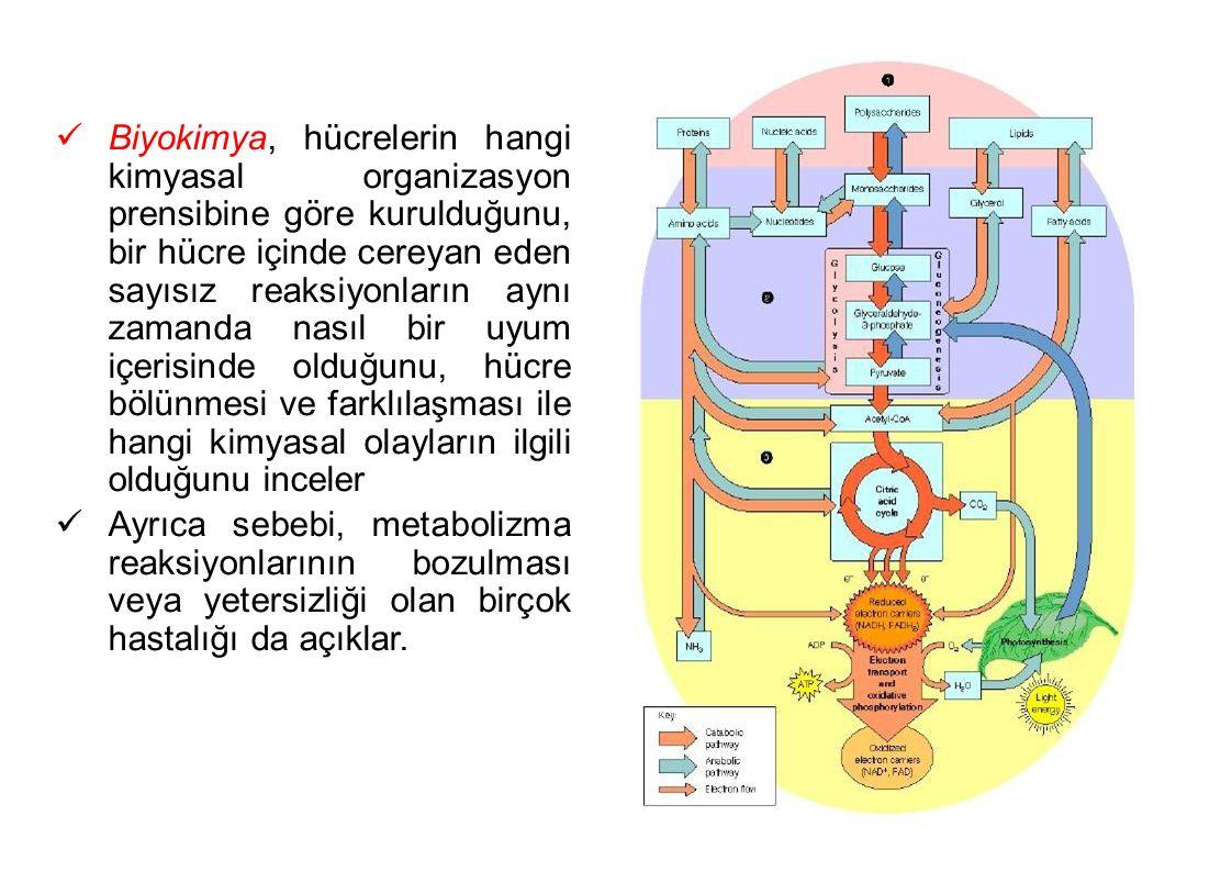 Biyokimya, hücrelerin hangi kimyasal organizasyon prensibine göre kurulduğunu, bir hücre içinde cereyan eden sayısız reaksiyonların aynı zamanda nasıl