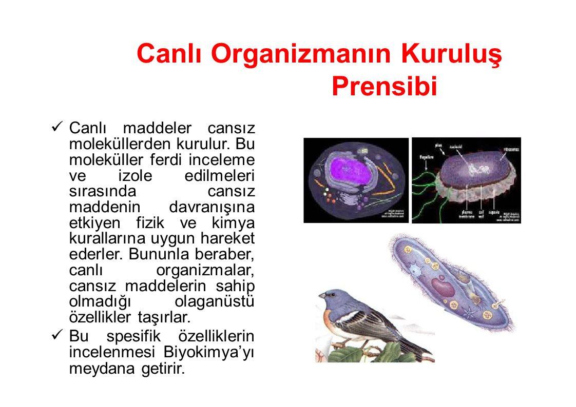 Canlı Organizmanın Kuruluş Prensibi Canlı maddeler cansız moleküllerden kurulur. Bu moleküller ferdi inceleme ve izole edilmeleri sırasında cansız mad