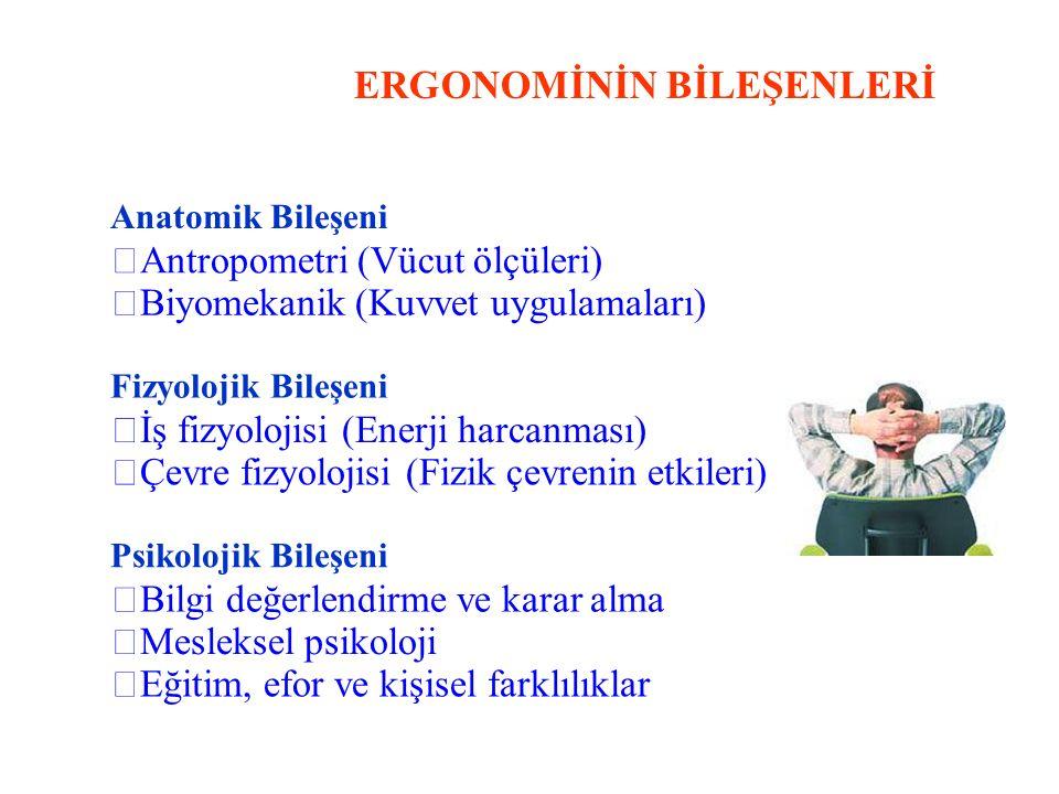 ERGONOMİNİN BİLEŞENLERİ Anatomik Bileşeni Antropometri (Vücut ölçüleri) Biyomekanik (Kuvvet uygulamaları) Fizyolojik Bileşeni İş fizyolojisi (Enerji harcanması) Çevre fizyolojisi (Fizik çevrenin etkileri) Psikolojik Bileşeni Bilgi değerlendirme ve karar alma Mesleksel psikoloji Eğitim, efor ve kişisel farklılıklar