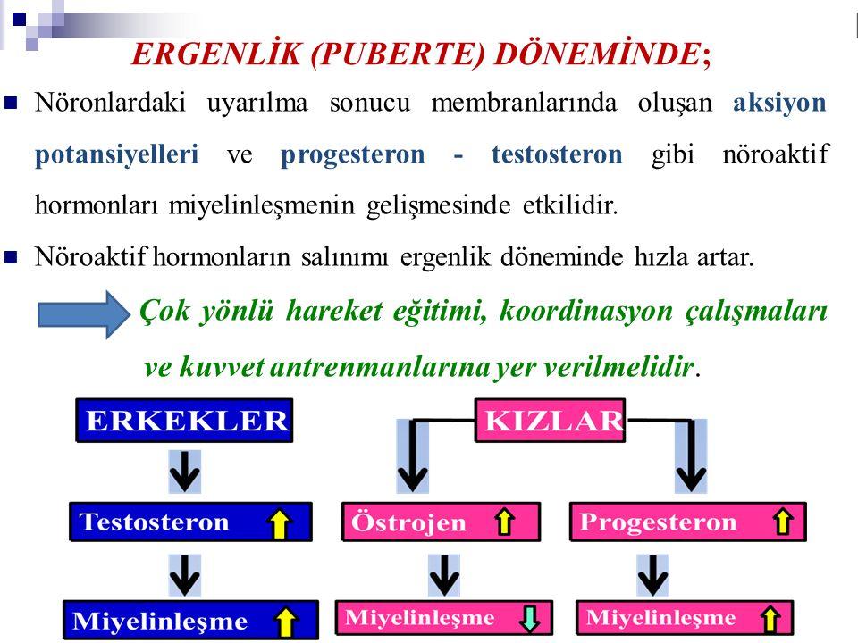 ERGENLİK (PUBERTE) DÖNEMİNDE; Nöronlardaki uyarılma sonucu membranlarında oluşan aksiyon potansiyelleri ve progesteron - testosteron gibi nöroaktif ho