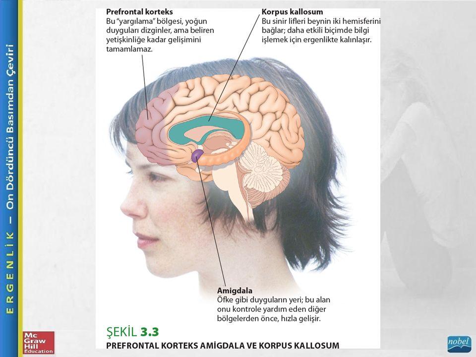 Beyin Beyin Yapısı, Biliş ve Duygu Frontal lobların en yüksek düzeyi olan prefrontal korteks, akıl yürütme, karar verme ve özdenetim ile uğraşır.