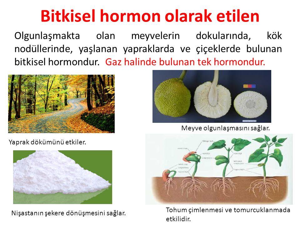 Bitkisel hormon olarak etilen Olgunlaşmakta olan meyvelerin dokularında, kök nodüllerinde, yaşlanan yapraklarda ve çiçeklerde bulunan bitkisel hormond