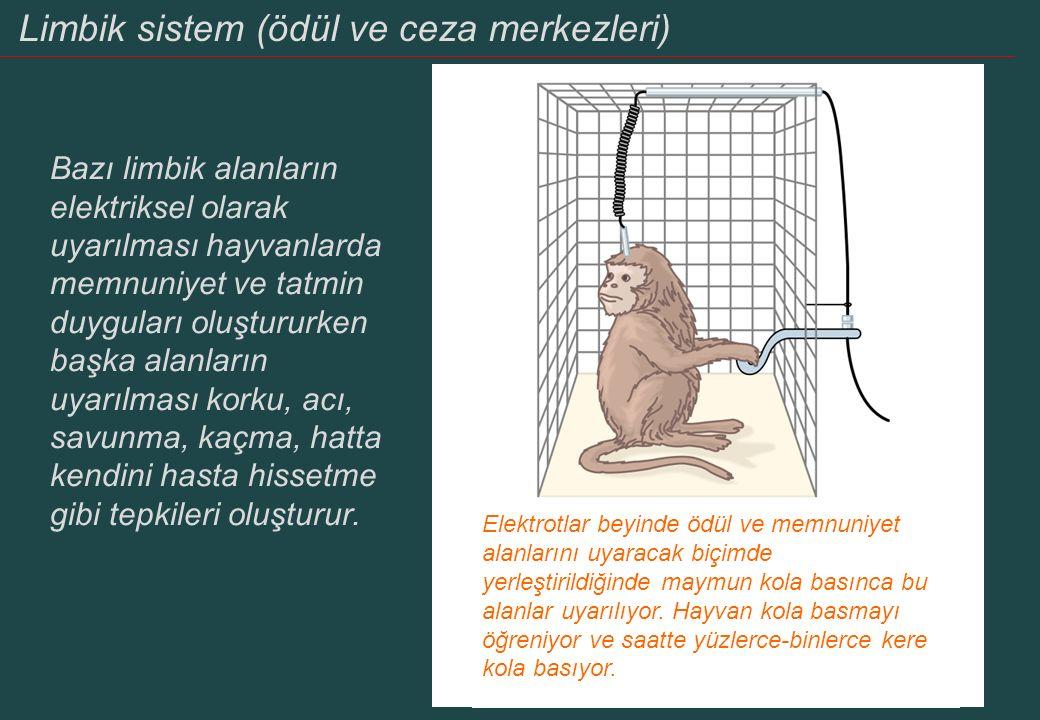 Bazı limbik alanların elektriksel olarak uyarılması hayvanlarda memnuniyet ve tatmin duyguları oluştururken başka alanların uyarılması korku, acı, sav