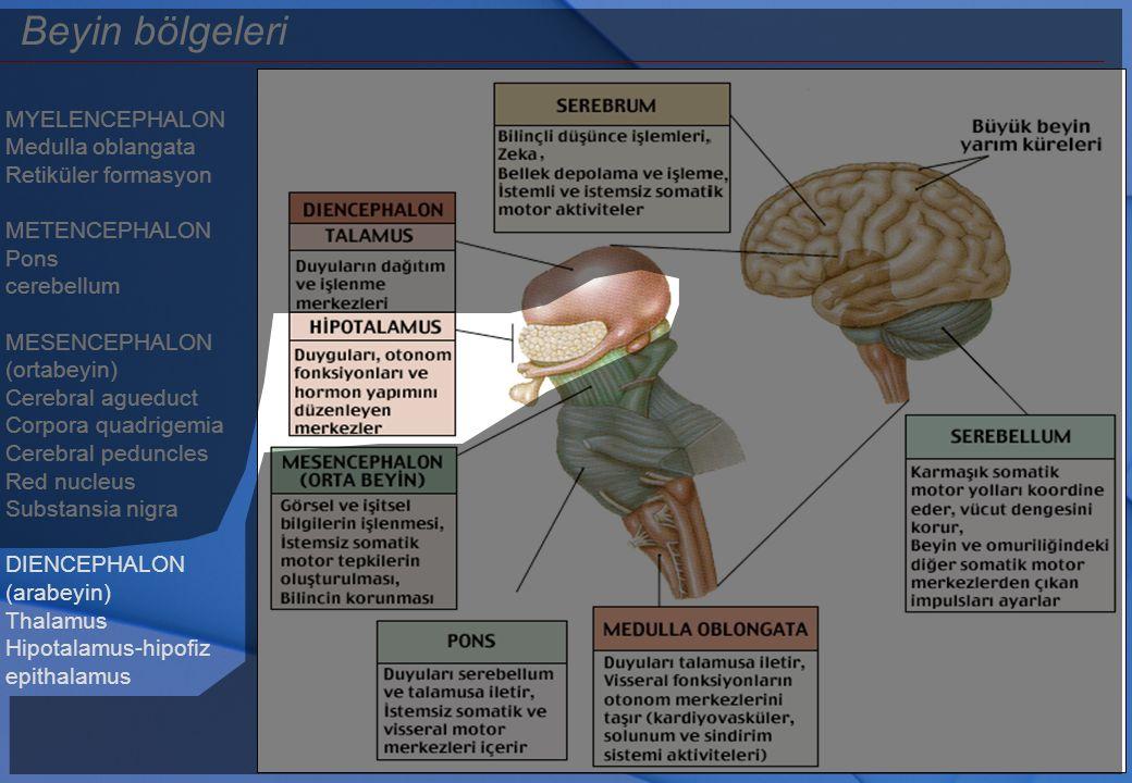 Beyin bölgeleri MYELENCEPHALON Medulla oblangata Retiküler formasyon METENCEPHALON Pons cerebellum MESENCEPHALON (ortabeyin) Cerebral agueduct Corpora
