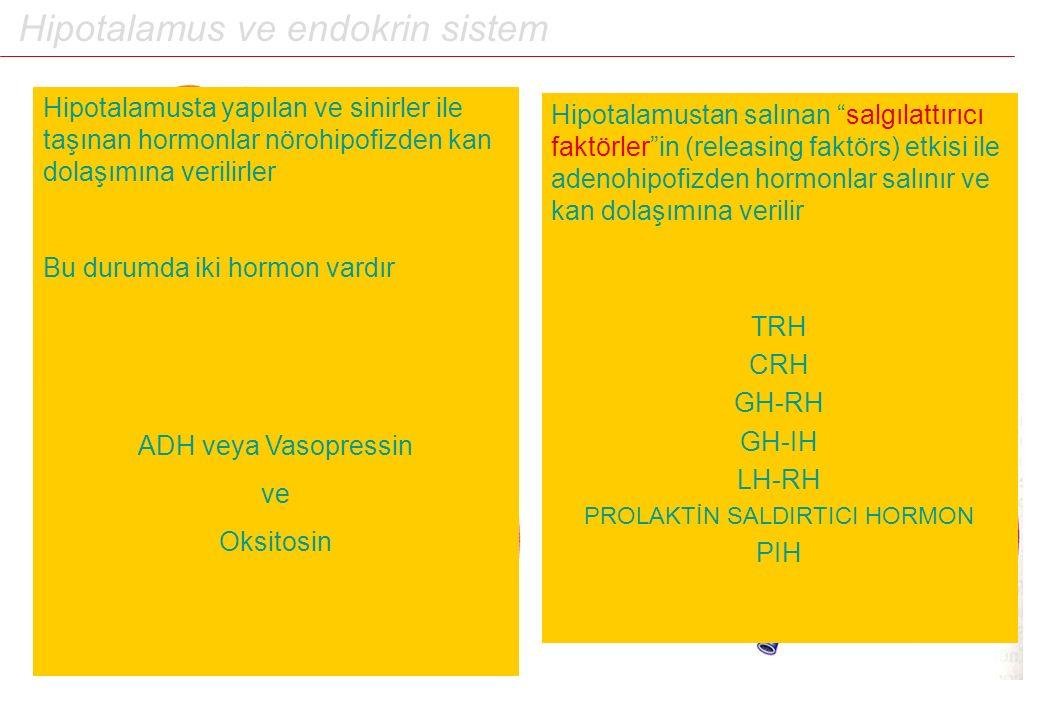 """Hipotalamus ve endokrin sistem Hipotalamustan salınan """"salgılattırıcı faktörler""""in (releasing faktörs) etkisi ile adenohipofizden hormonlar salınır ve"""