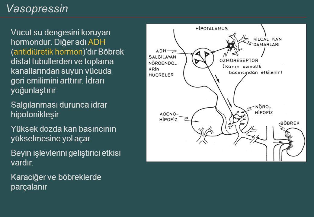 Vasopressin Vücut su dengesini koruyan hormondur. Diğer adı ADH (antidiüretik hormon)'dır Böbrek distal tubullerden ve toplama kanallarından suyun vüc