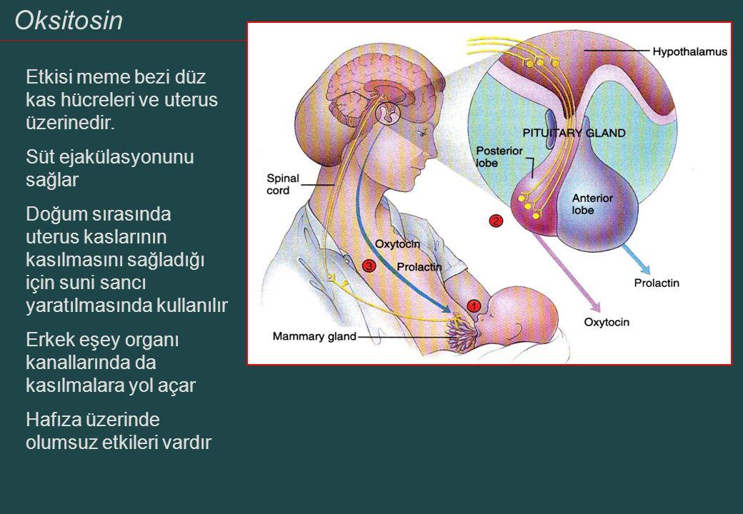 Oksitosin Etkisi meme bezi düz kas hücreleri ve uterus üzerinedir. Süt ejakülasyonunu sağlar Doğum sırasında uterus kaslarının kasılmasını sağladığı i