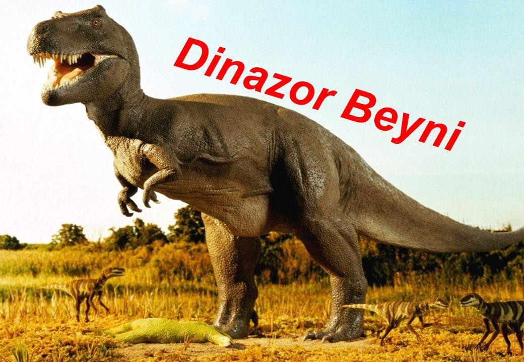 Dinazor Beyni