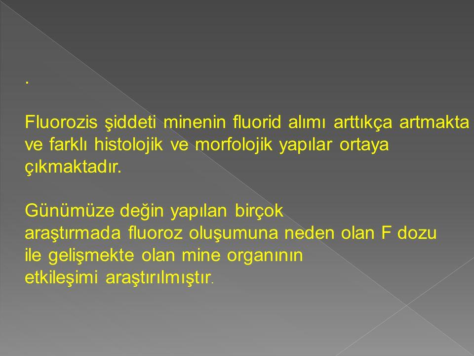 . Fluorozis şiddeti minenin fluorid alımı arttıkça artmakta ve farklı histolojik ve morfolojik yapılar ortaya çıkmaktadır. Günümüze değin yapılan birç