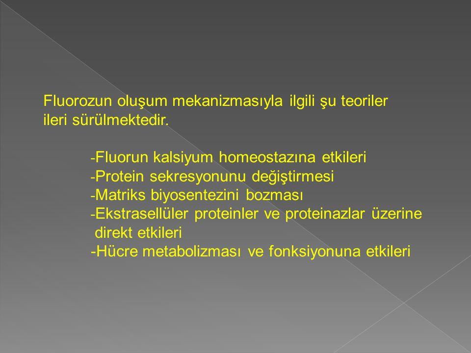 Fluorozun oluşum mekanizmasıyla ilgili şu teoriler ileri sürülmektedir. - Fluorun kalsiyum homeostazına etkileri - Protein sekresyonunu değiştirmesi -