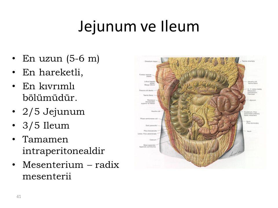 41 Jejunum ve Ileum En uzun (5-6 m) En hareketli, En kıvrımlı bölümüdür.