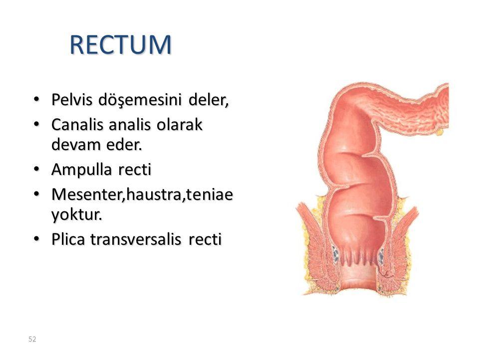 52 RECTUM Pelvis döşemesini deler, Pelvis döşemesini deler, Canalis analis olarak devam eder.