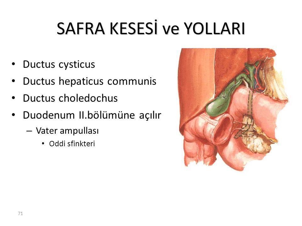 71 SAFRA KESESİ ve YOLLARI Ductus cysticus Ductus hepaticus communis Ductus choledochus Duodenum II.bölümüne açılır – Vater ampullası Oddi sfinkteri