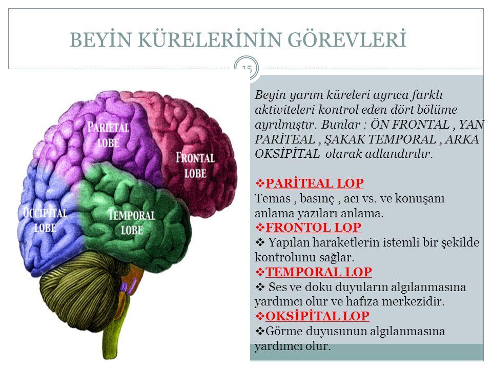 BEYİN KÜRELERİNİN GÖREVLERİ HALİT ÇOBAN 15 Beyin yarım küreleri ayrıca farklı aktiviteleri kontrol eden dört bölüme ayrılmıştır. Bunlar : ÖN FRONTAL,