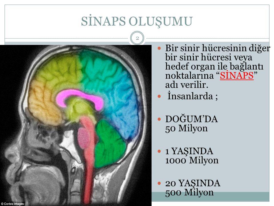 """SİNAPS OLUŞUMU HALİT ÇOBAN 2 Bir sinir hücresinin diğer bir sinir hücresi veya hedef organ ile bağlantı noktalarına """"SİNAPS"""" adı verilir. İnsanlarda ;"""
