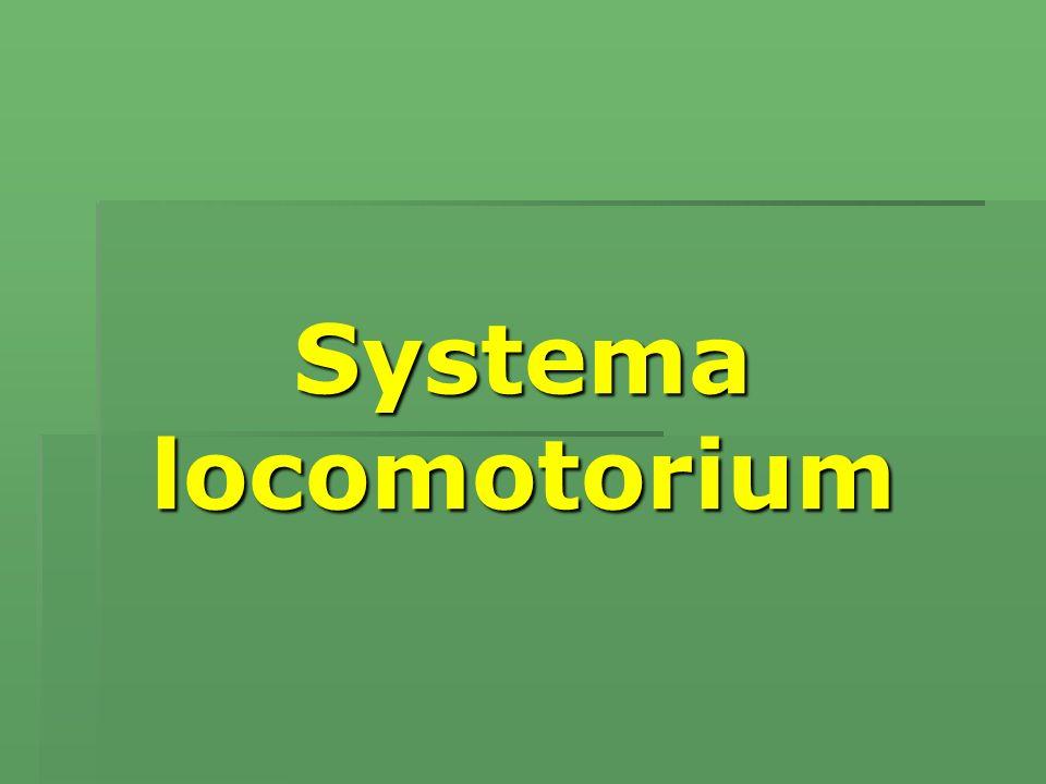 Osteologia Kemiklerin şekilleri   Ossa longa:   Corpus   Caput   Collum   Extremitas proximalis   Extremitas distalis
