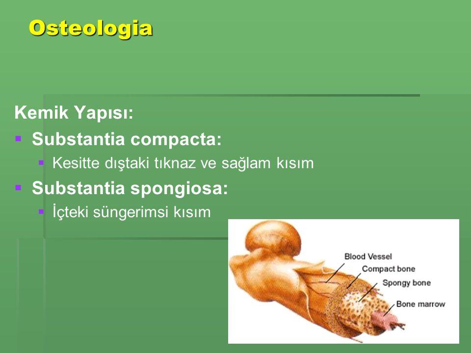 Osteologia Kemik Yapısı:   Substantia compacta:   Kesitte dıştaki tıknaz ve sağlam kısım   Substantia spongiosa:   İçteki süngerimsi kısım
