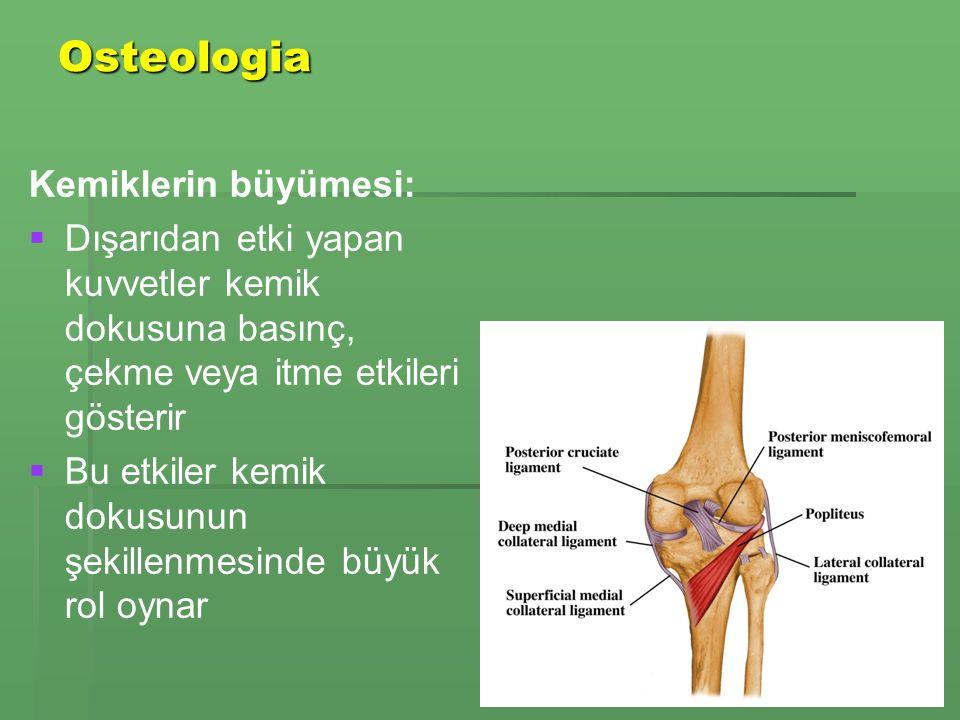 Osteologia Kemiklerin büyümesi:   Dışarıdan etki yapan kuvvetler kemik dokusuna basınç, çekme veya itme etkileri gösterir   Bu etkiler kemik dokusunun şekillenmesinde büyük rol oynar