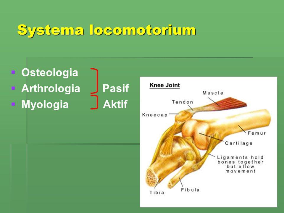   Osteologia   Arthrologia Pasif   Myologia Aktif