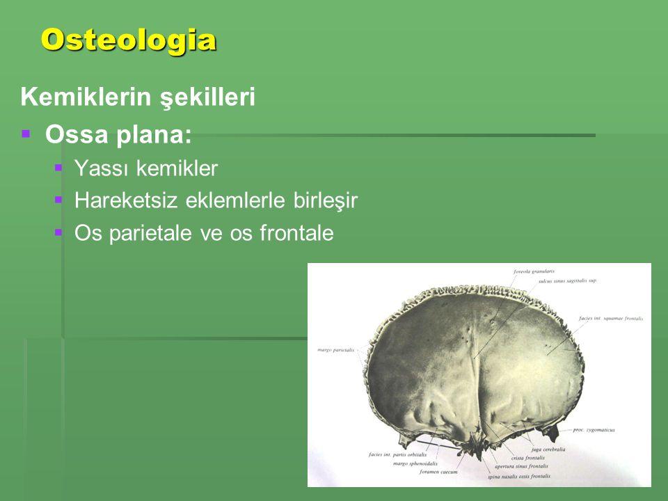 Osteologia Kemiklerin şekilleri   Ossa plana:   Yassı kemikler   Hareketsiz eklemlerle birleşir   Os parietale ve os frontale