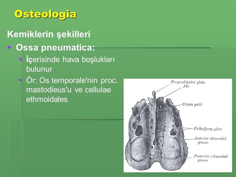 Osteologia Kemiklerin şekilleri   Ossa pneumatica:   İçerisinde hava boşlukları bulunur   Ör: Os temporale nin proc.