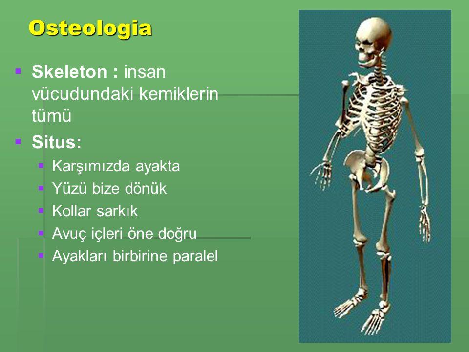 Osteologia   Skeleton : insan vücudundaki kemiklerin tümü   Situs:   Karşımızda ayakta   Yüzü bize dönük   Kollar sarkık   Avuç içleri öne doğru   Ayakları birbirine paralel