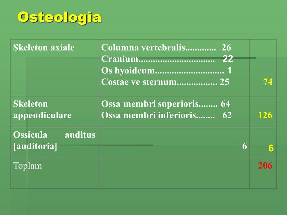 Osteologia Skeleton axialeColumna vertebralis.............