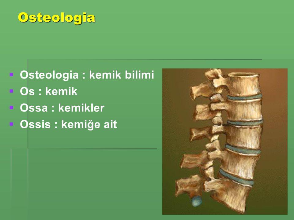 Osteologia   Osteologia : kemik bilimi   Os : kemik   Ossa : kemikler   Ossis : kemiğe ait