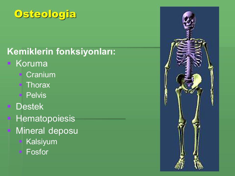 Osteologia Kemiklerin fonksiyonları:   Koruma   Cranium   Thorax   Pelvis   Destek   Hematopoiesis   Mineral deposu   Kalsiyum   Fosfor