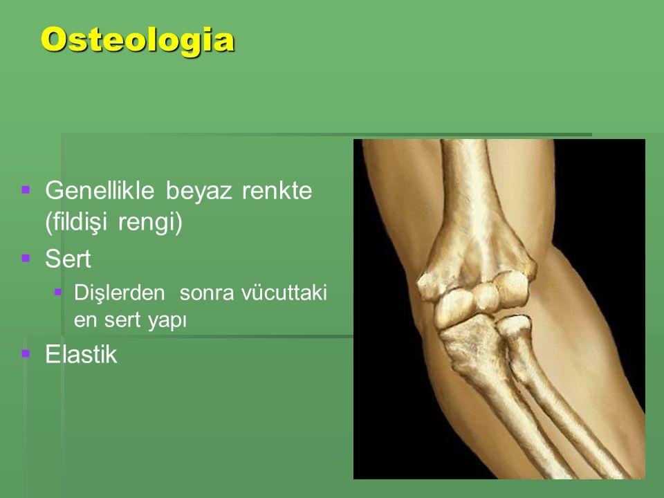 Osteologia Kemiklerin büyümesi:   Periosteum un hemen altındaki osteoblast lar kemik dokusunu oluşturup çoğaltır   Yanındaki osteoklast lar da eski kemik dokusunu ortadan kaldırarak yeni oluşacak hücrelere yer açarlar   Böylece kemikler kuvvetlenir ve kalınlaşır