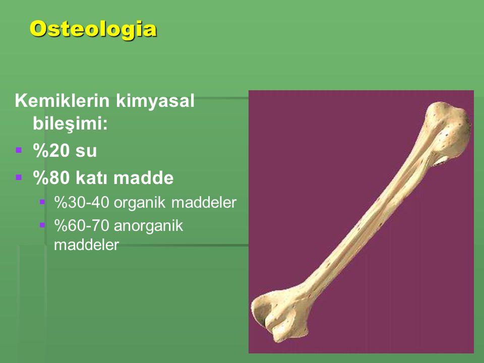 Osteologia Kemiklerin kimyasal bileşimi:   %20 su   %80 katı madde   %30-40 organik maddeler   %60-70 anorganik maddeler