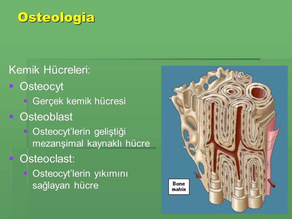 Osteologia   Skeleton appendiculare:   Üst ve alt taraflar   Skeleton axiale:   Baş - pelvis alt kısmı