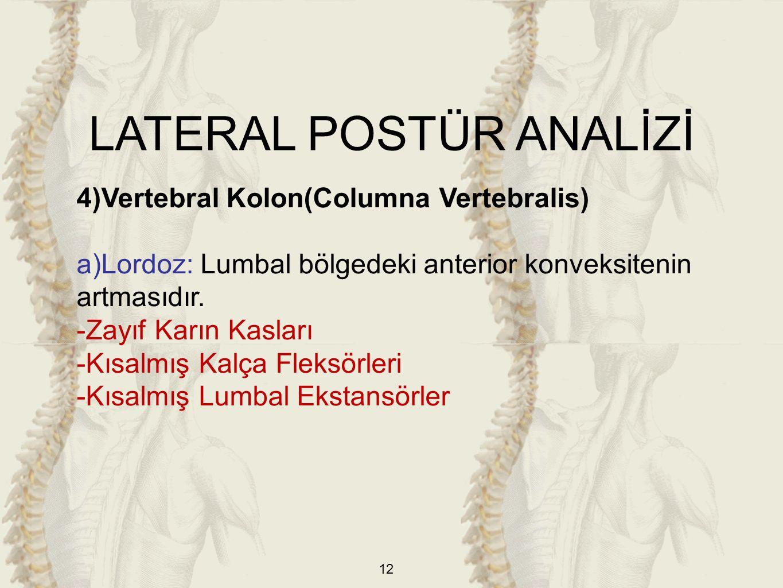 12 4)Vertebral Kolon(Columna Vertebralis) a)Lordoz: Lumbal bölgedeki anterior konveksitenin artmasıdır. -Zayıf Karın Kasları -Kısalmış Kalça Fleksörle