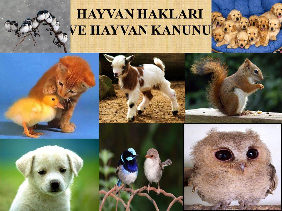 SUNUMUN AMACI Dünya Hepimizindir *Bir milletin büyüklüğü ve ahlaki gelişimi, hayvanlara olan davranış biçimi ile değerlendirilir.