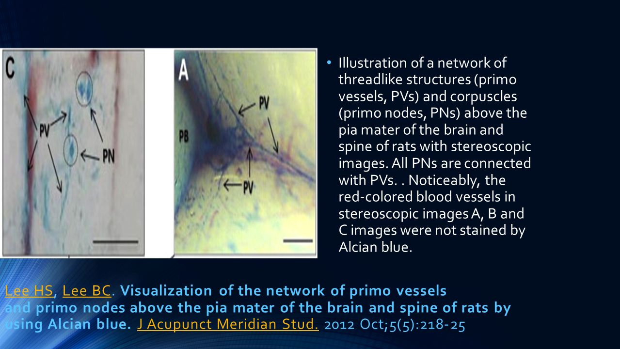 Lee HSLee HS, Lee BC. Visualization of the network of primo vessels and primo nodes above the pia mater of the brain and spine of rats by using Alcian